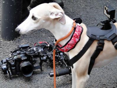 犬マウント付きカメラ